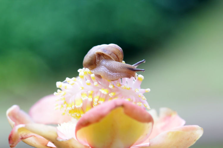 snails, snails over yellow flowers Animal Animal Themes Animal Wildlife Animals In The Wild Beauty In Nature Close-up Flower Flower Head Flowering Plant Fragility Freshness Growth Invertebrate Mollusk Nature No People One Animal Outdoors Petal Plant Pollen Pollination Selective Focus Vulnerability