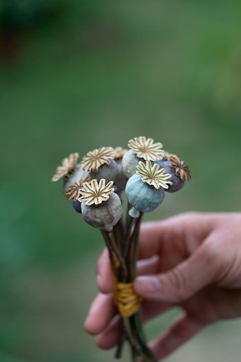 Close-up of hand holding flower