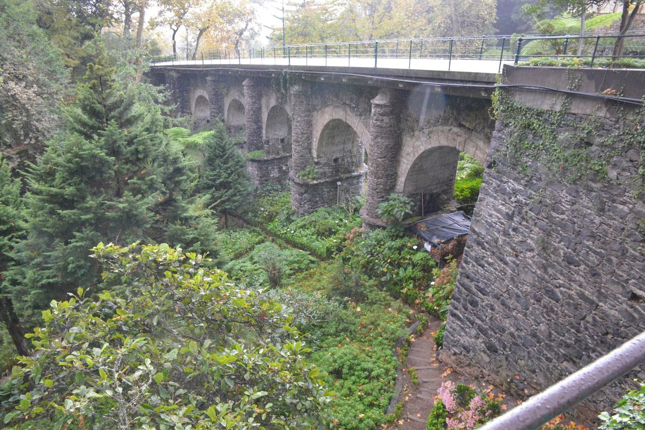 bridge - man made structure, connection, viaduct, arch bridge, arch, architecture, built structure, tree, day, transportation, train - vehicle, no people, outdoors, plant, nature, growth, steam train