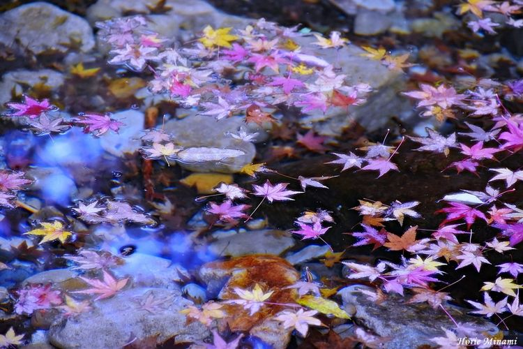 EyeEm Gallery EyeEm Nature Lover EyeEm Best Shots Flower Fragility Nature Petal Beauty In Nature Growth No People