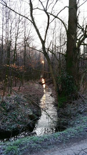 Creek Wintertime Sunrise Forest