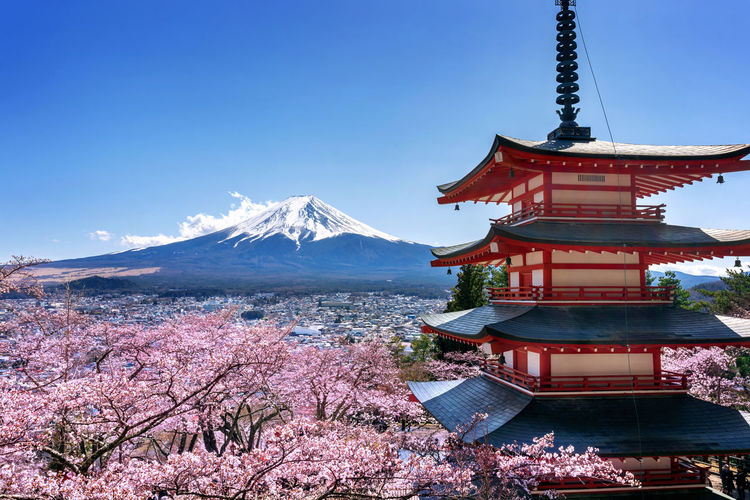 Cherry blossoms in spring, Chureito pagoda and Fuji mountain in Japan. Sky Mountain Snow Cold Temperature Plant Beauty In Nature Nature Winter Tree Snowcapped Mountain Built Structure Building Exterior Religion No People Architecture Flower Place Of Worship Day Cherry Blossom Springtime Outdoors Cherry Tree