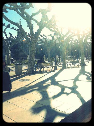 Sun Trees January Arboles