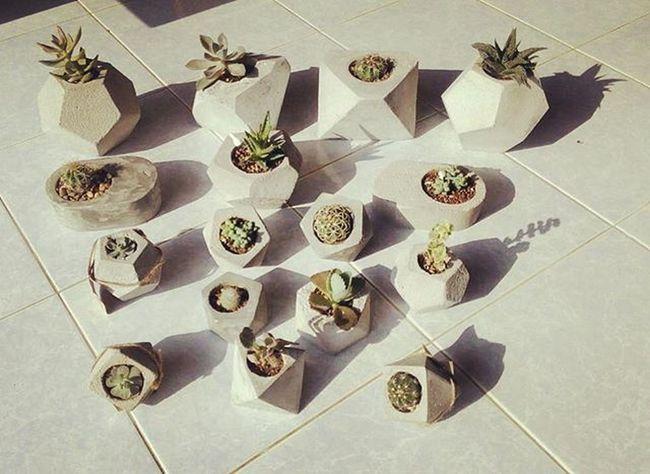 กองทัพเล็กๆของdibte กระถางปูนเปลือยหลากหลายรูปทรงใส่ต้นไม้แล้วเท่ทุกทรงครับ กระถางปูนเปลือย กระถางกระบองเพชร กระถาง กระถางต้นไม้ DIY Design Style Dib_te Cactusthailand Cactus Cacti Cactusmagazine Cactuslover Cactuslovers Garden Gardening Plant Plants Planter Cactusclubcafe Cactusclub Succulent Seculentas