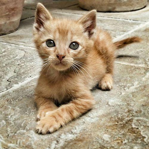 Pets Corner Cat♡ Mycat♥ Amorepuro Hope.✌ Nikonphotography Eyemanimals Eyemphotography Nikon Ilovemycat