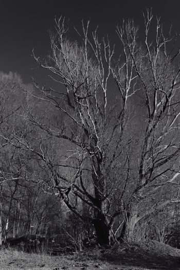 Naked Trees Red Filter Where Strangers Stay Saturday Black&white Black And Bright Monochrome