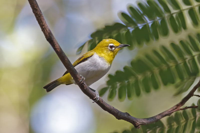 Bird Vertebrate Animal Wildlife Animal Themes Perching Animal Animals In The Wild One Animal Branch Plant Focus On Foreground Tree No People Nature Day Close-up Outdoors Selective Focus Beauty In Nature Leaf