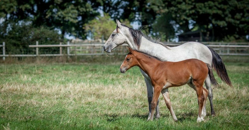 Horse And Foal Standing On Grassy Field
