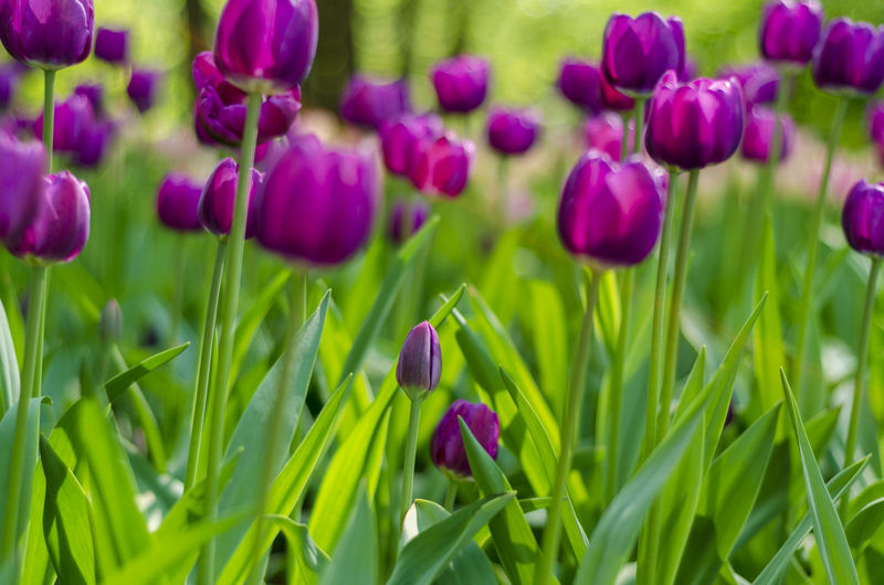 Flower Plant Flowering Plant Beauty In Nature Growth Purple Freshness Close-up Green Color Fragility Vulnerability  Land Field Nature No People Petal Selective Focus Inflorescence Grass Flower Head Springtime Flowerbed