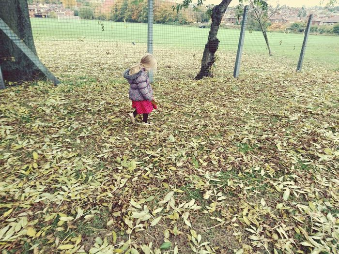 Childhood Child One Person Full Length Children Only People Outdoors Day Autumn Autumn Colors Autumn Leaves Fall Gold Colored Uniqueness