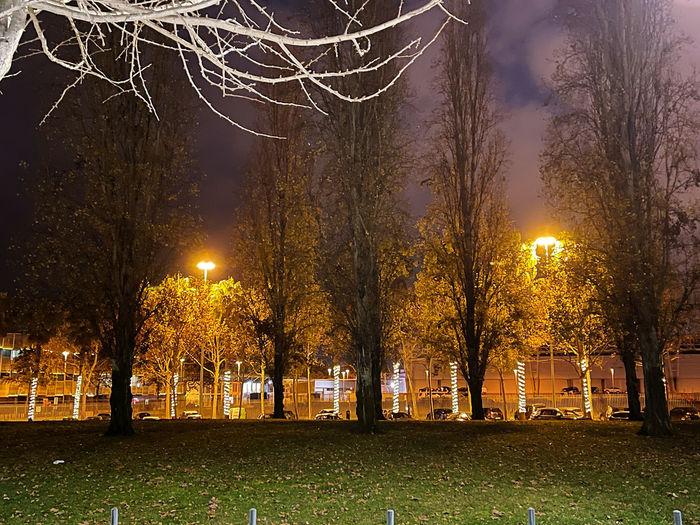 Illuminated street light in park at night