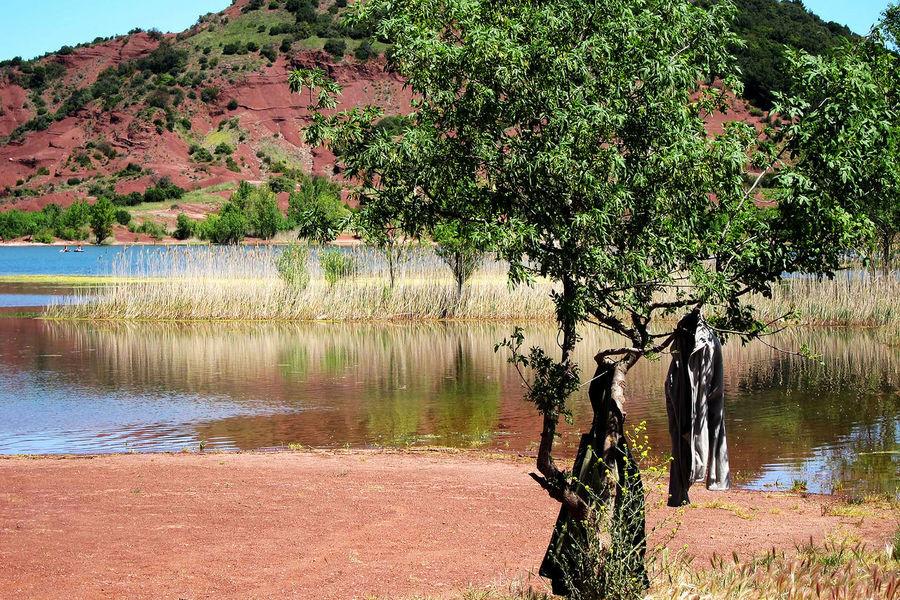 Salagou Lake Trees Hanging Coat Lake View Nature No People Outdoors Red Soil Water