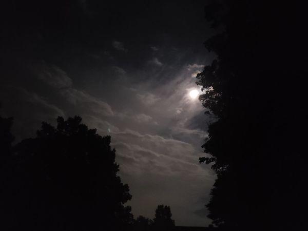 Moon Tree Silhouette Sky
