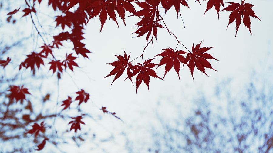 Autumn leaves on branch