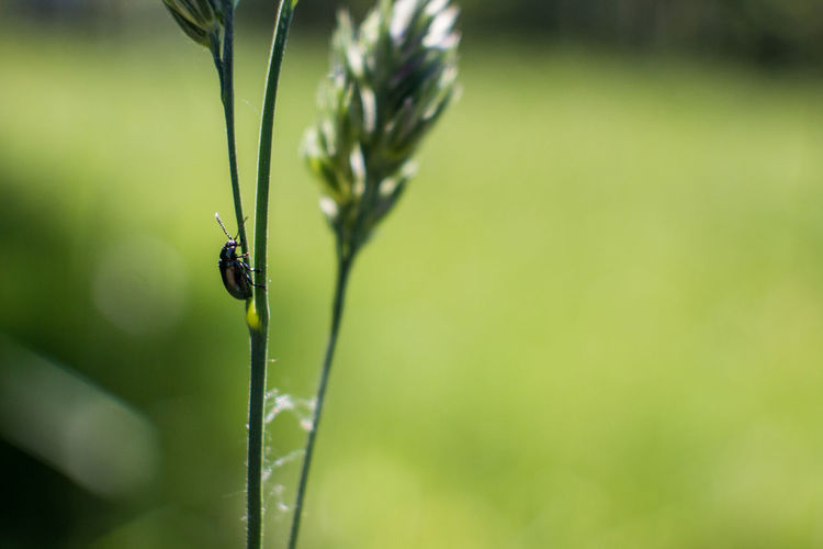 Black Insect On Plant