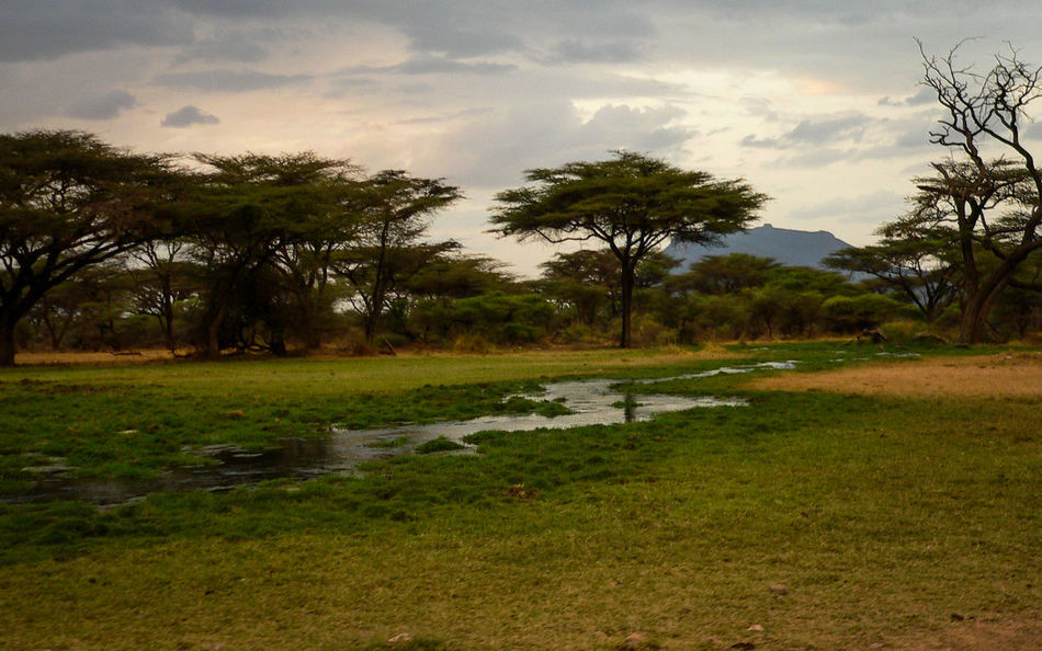 Shaba National Reserve in Northern Kenya Kenya National Park The Week On EyeEm Africa Beauty In Nature Cloud - Sky Day Field Forest Grass Green Color Growth Landscape Nature No People Outdoors Scenics Sky Sunset Tranquil Scene Tranquility Travel Destinations Tree Water