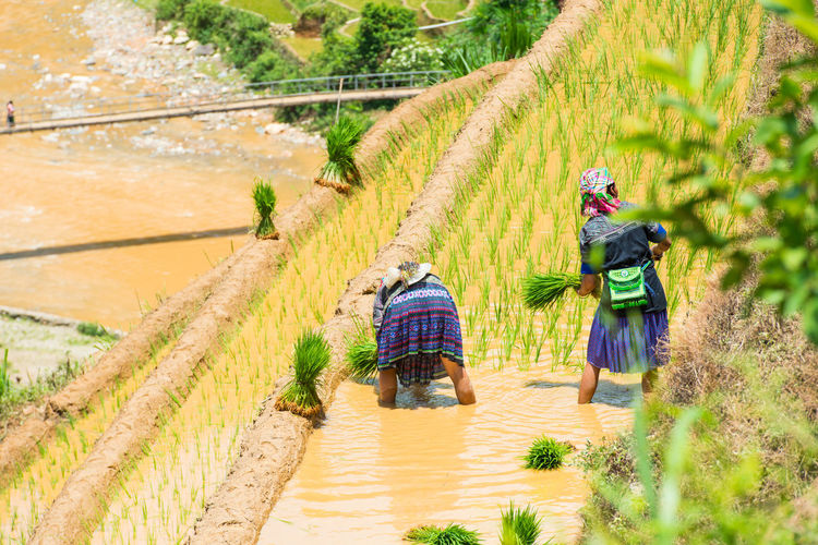 High Angle View Of Women Working On Terraced Field