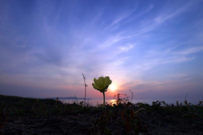 僕の金週初日の空✨ May Sunset Flower Fukuoka-shi Fukuoka,Japan