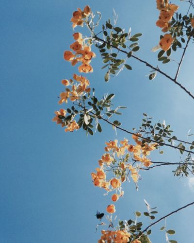 Flowers Blue Sky