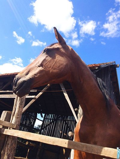 Horses Horseslove Horse Riding Photography Happyhorse Horse Photography  Horse Life Horse <3 Horsegirl 🏇🏆 👧🏼❤️🐴