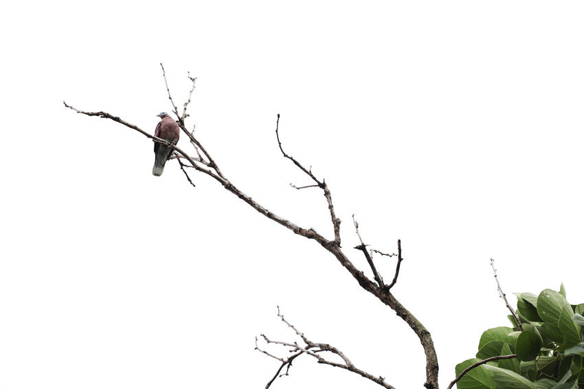 Bird Bird Photography Bird On The Tree Bird And Tree Animal Themes Animal One Animal