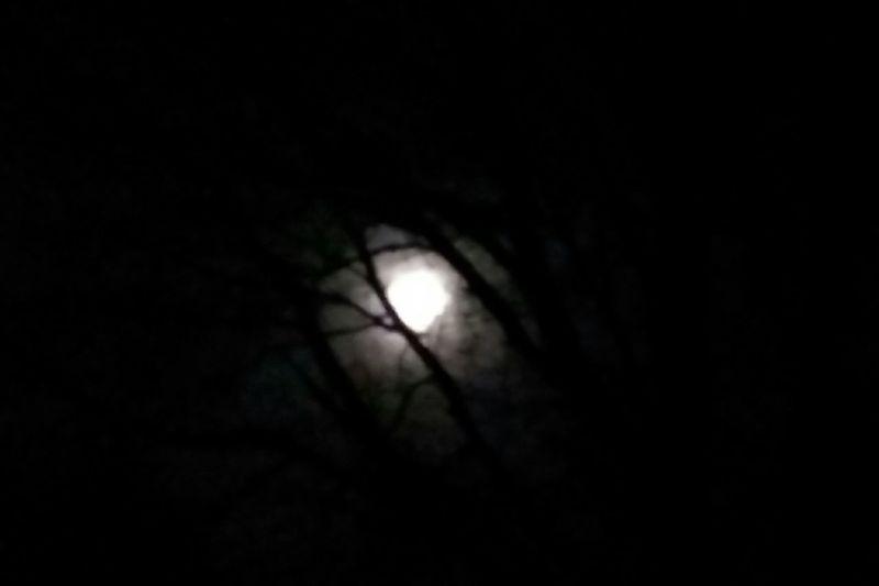 Night Moon Tree Close-up Spooky