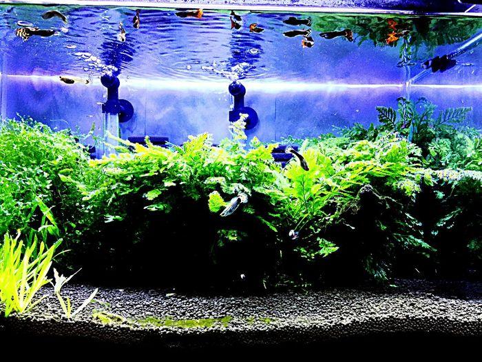 Aquarium Aquaplants
