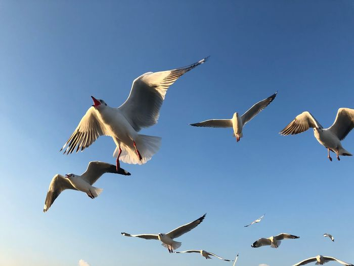 seagulls with