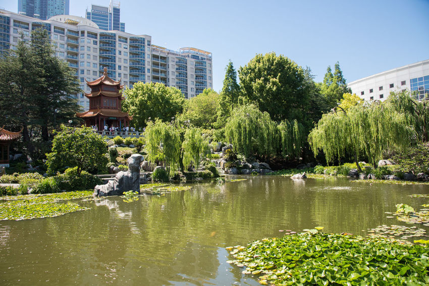 Sydney,NSW,Australia-November 18,2016: Chinese Garden of Friendship with tourists in Sydney, Australia. Architecture Australia Chinese Chinese Garden Chinese Garden Of Friendship City Garden Gazebo Growth High Rise Landscape Lotus Lush Foliage Peaceful Pergola Pond Rock Scenics Skyscraper Sydney Tourism Tourists Water Lily Weeping Willow Willow Tree