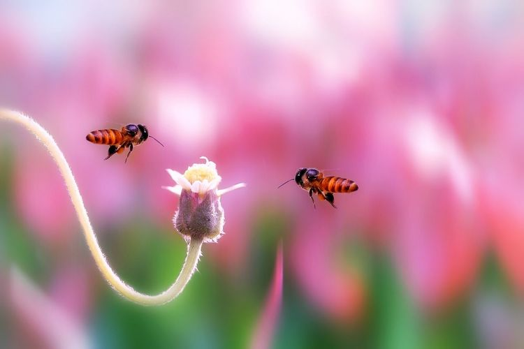 Insect Flower Animals In The Wild Animal Wildlife Animal Themes Nature Bee Close-up Fragility Focus On Foreground No People Day Plant Outdoors Beauty In Nature Freshness Buzzing Perching Flower Head