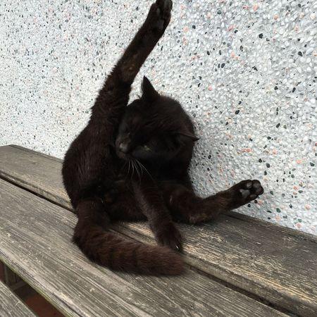 Cat Taiwan Houtong