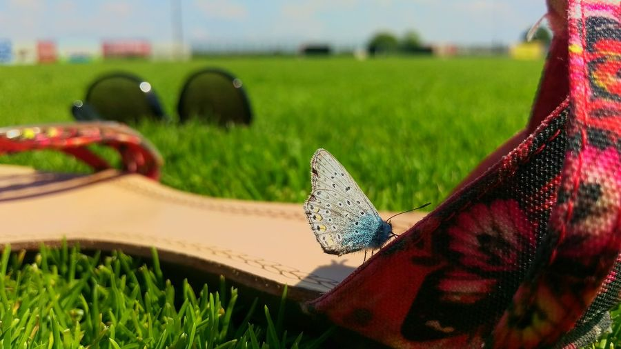 Grass Sky Green Color Outdoors No People Nature Beauty In Nature Summertime Butterfly Butterfly ❤ Butterflies Butterfly Macro Butterfly Wings Butterfly Encounter Macro Photography Macro Macro Nature Macro_collection Rennyphotos Close-up Croatia ❤ Summer2016