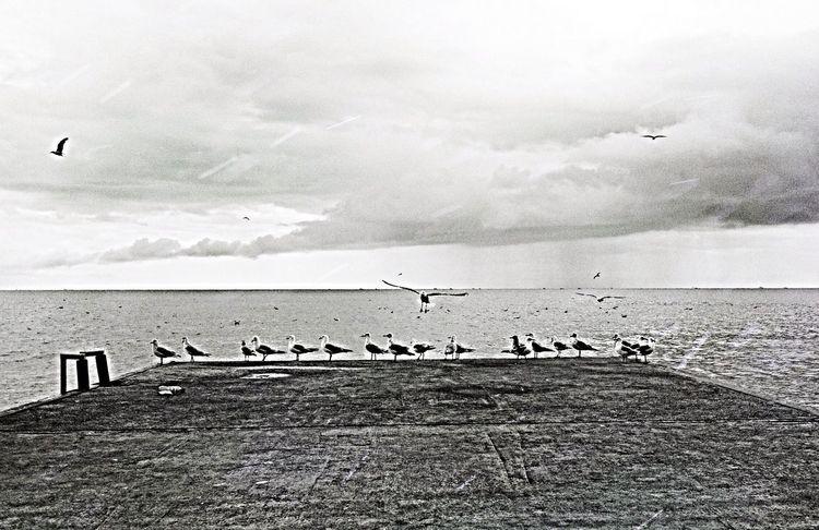 IPSStory Birds