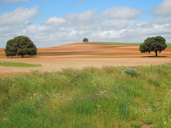 Clouds Grass Landscape Landschaft Nature Outdoors Rioja Rural Scene Scenery Summer Tranquil Scene Trees Vastness Wanderlust