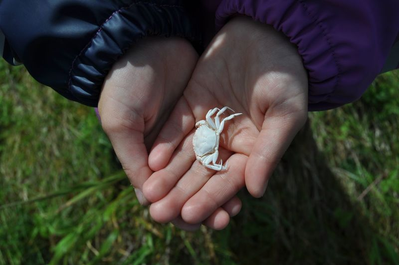 Cropped hands of person holding crab over grassy field