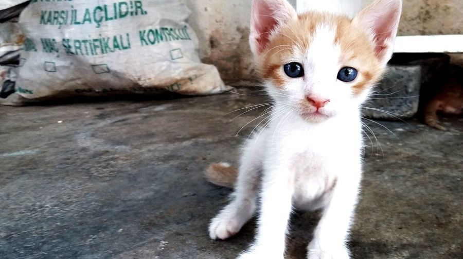 Portrait of kitten sitting on street