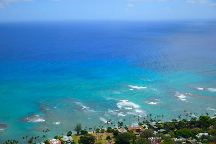 Hawaii Hawaii Life Holiday Ocean View Palms Waikiki Waikiki Beach Beach Blue Diamond Head Hawaiian Honolulu  Horizon Horizon Over Water Nature Ocean Outdoors Palm Trees Resort Scenics - Nature Sea Sea And Sky Seascape Vacation Water