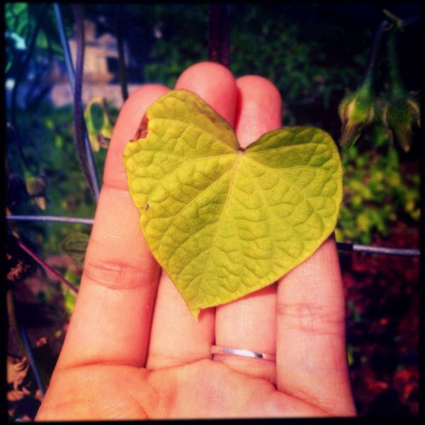 It's a little worse for wear, but if you give it a chance, I know it can love. Heart Leaf Nature Love