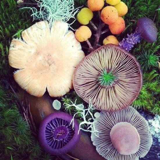 Psycadelic Shrooms Mushrooms