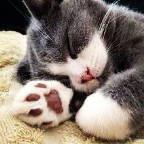 Good Night! ♡
