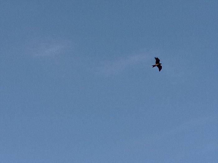 Bird Egale Nature Taking Photos Alandur Chennai