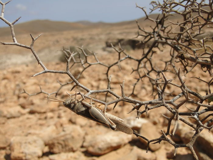 Animal Themes Animals In The Wild Arid Climate Bare Tree Beauty In Nature Close-up Day Dead Plant Desert Dried Plant Focus On Foreground Landscape Nature No People Outdoors Tree