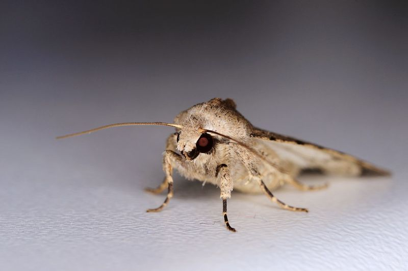 Close-up of moth on floor