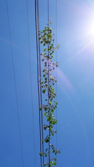 Low Angle View Of Creeper Plants On Power Lines Against Sky