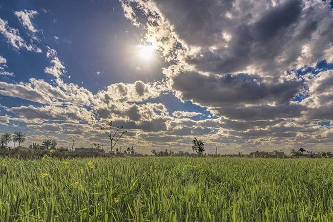 .Iraq . By Me Landscape Before Sunset Cloudy Spring Blue Sky Yellow Green Clouds Tree Bird Village Topaz HD Nikon Nikkor Sparrows Nikon Photo Photographer Photography Photoshop iraq country countryside throwback..