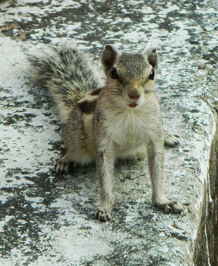 Squirrel Squirrel Photo Squirrel Closeup Squirrel! Squirrel Friend  Angry Squirrel Squirrelsofinstagram Squirrelwatching Squirrel Standing