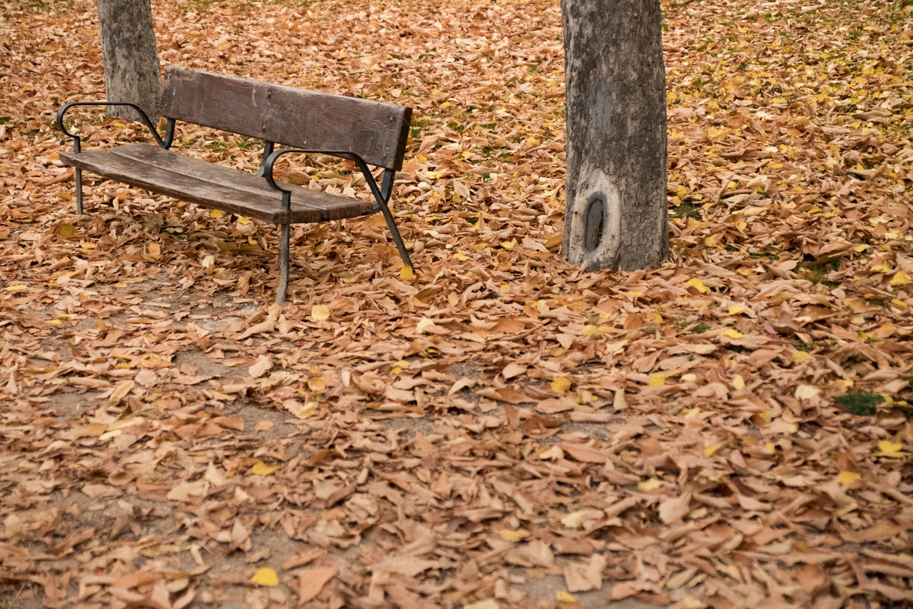 SURFACE LEVEL OF EMPTY BENCH
