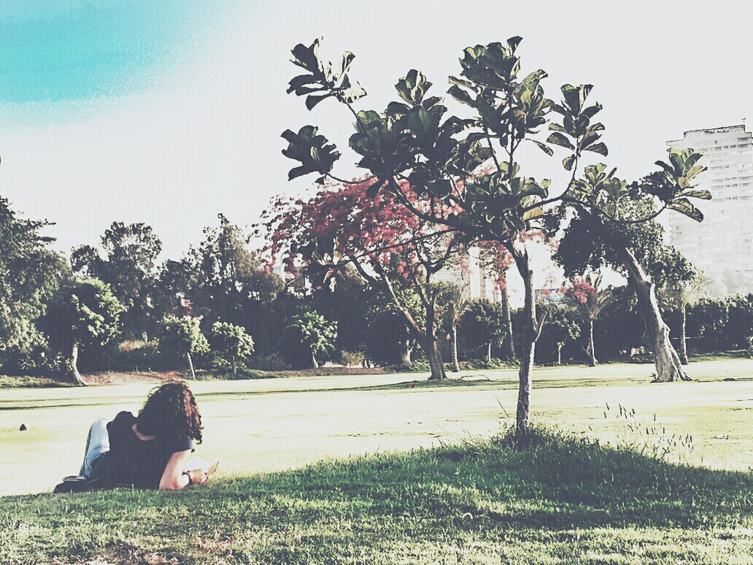 tree, growth, sky, park - man made space, tranquility, clear sky, bench, nature, sunlight, palm tree, shadow, day, absence, tree trunk, tranquil scene, outdoors, empty, branch, field, no people