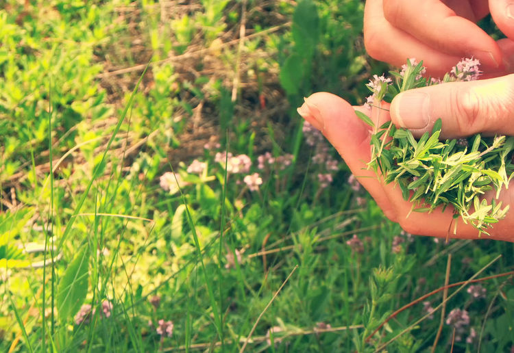 Midsection of person holding plant in field