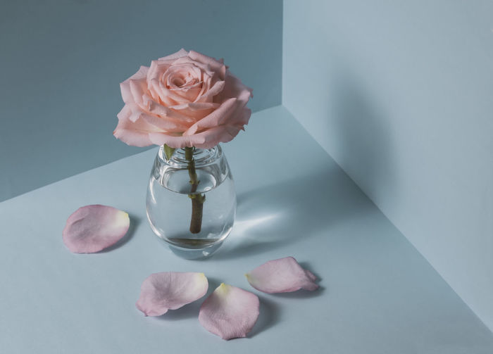 Close-up of rose in glass on table